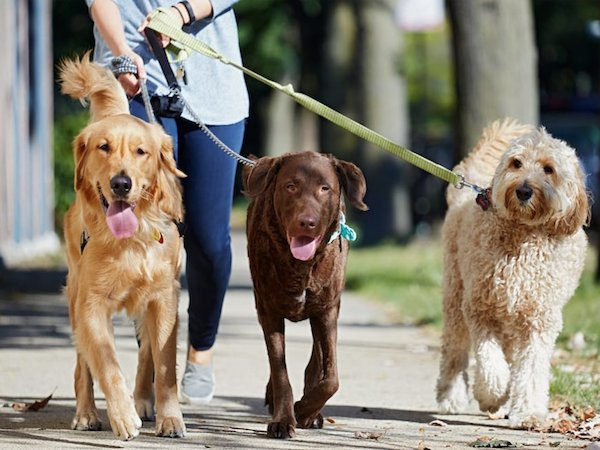 best dog-walking spots in Dublin