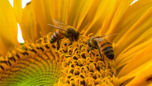 Save the Bees The UK signs approval of a harmful pesticide