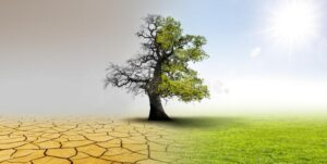 climate change landscape dry earth oak tree meadow 173612101
